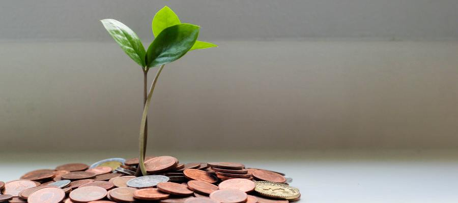 small tree growing out of a pile of coins